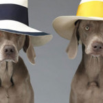 luxurylab_fashion_dogs_ampliando_ligacoes_emocionais