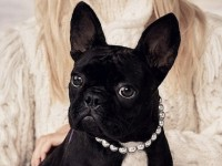 o-LADY-GAGA-DOG-facebook